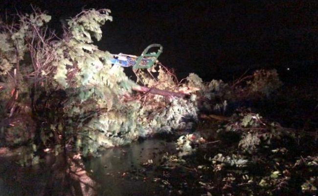 CAOS MALTEMPO. Crollano gli alberi per il temporale, ferite due persone - CasertaCE